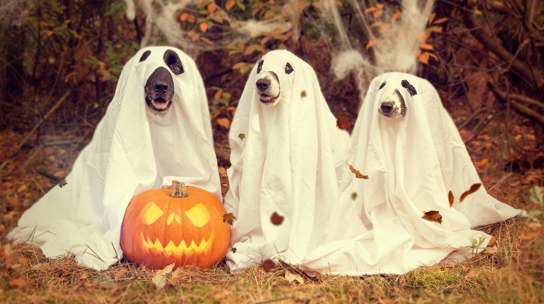 dogs-in-ghost-halloween-costumes